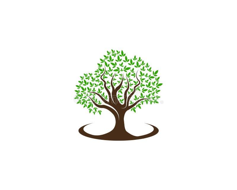 Verde del vector de la naturaleza del elemento de la ecología del logotipo de la hoja del árbol stock de ilustración