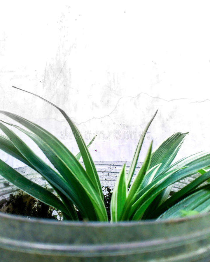 Verde della natura immagine stock