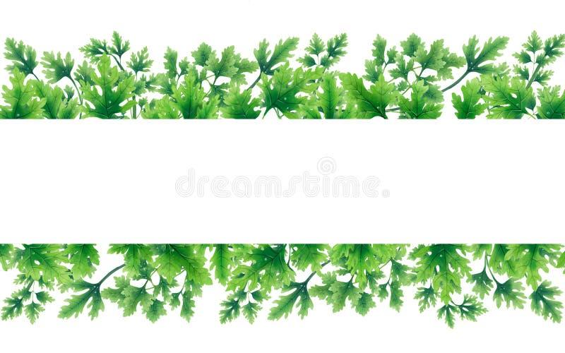 Verde delle foglie del prezzemolo ai confini illustrazione vettoriale