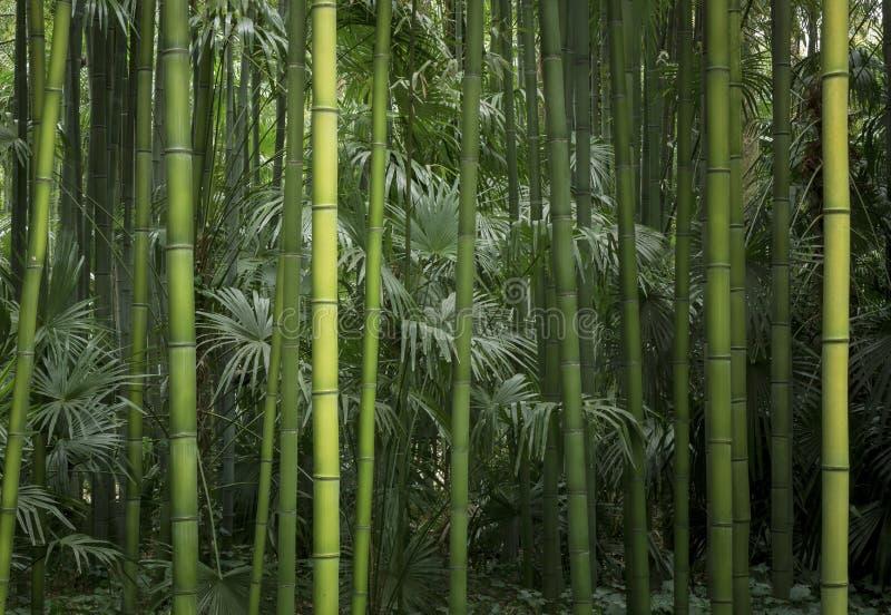 Verde di bambù leggero e scuro immagini stock