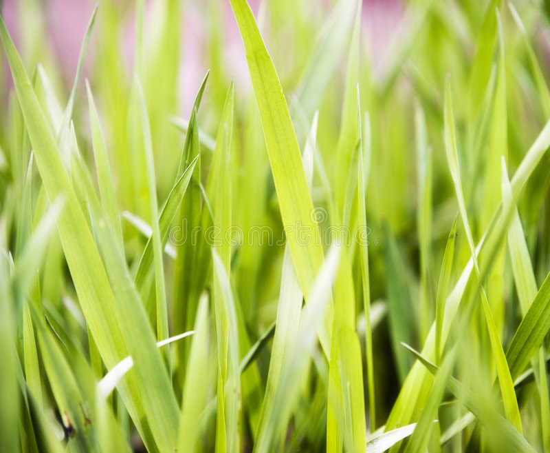 verde di erba immagini stock libere da diritti