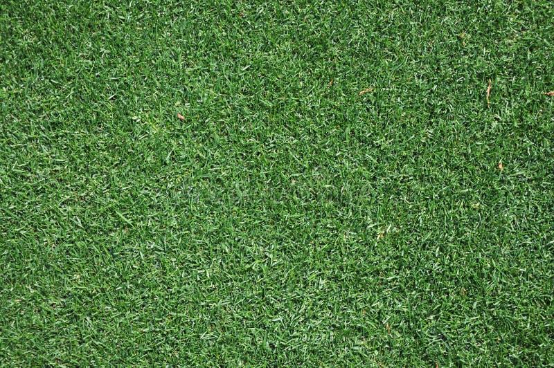 verde di erba della priorità bassa fotografia stock libera da diritti