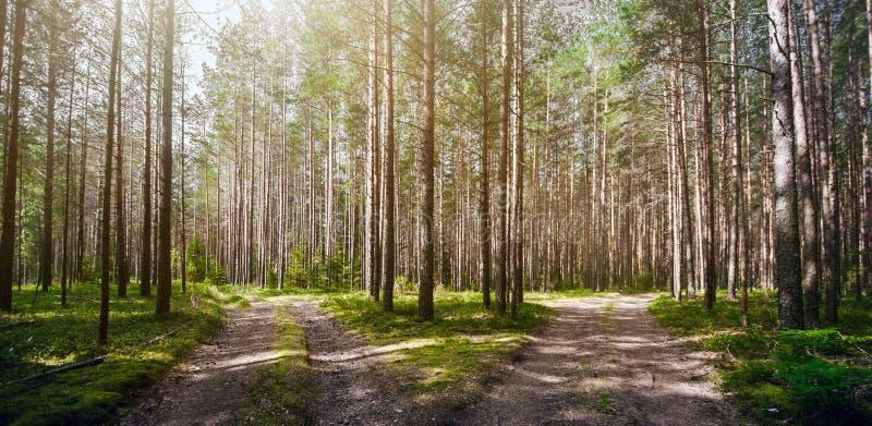 Verde di estate di Forest Ecology fotografie stock libere da diritti