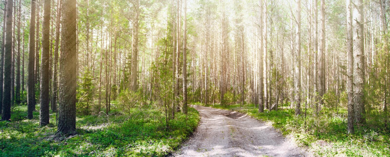 Verde di estate di Forest Ecology fotografia stock