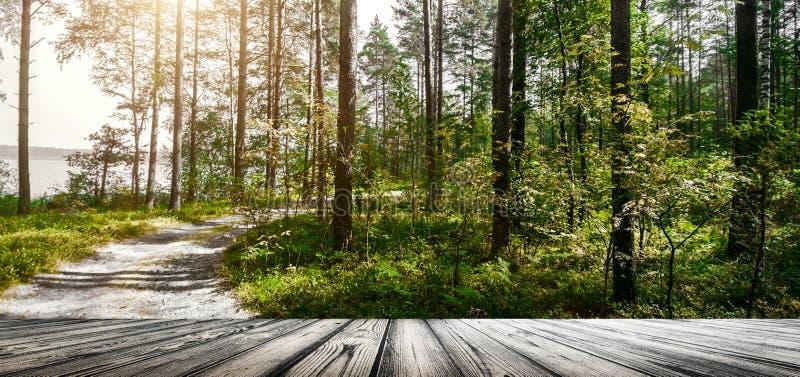 Verde di estate di Forest Ecology immagine stock libera da diritti