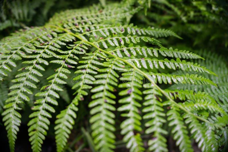 Verde di foresta fotografia stock