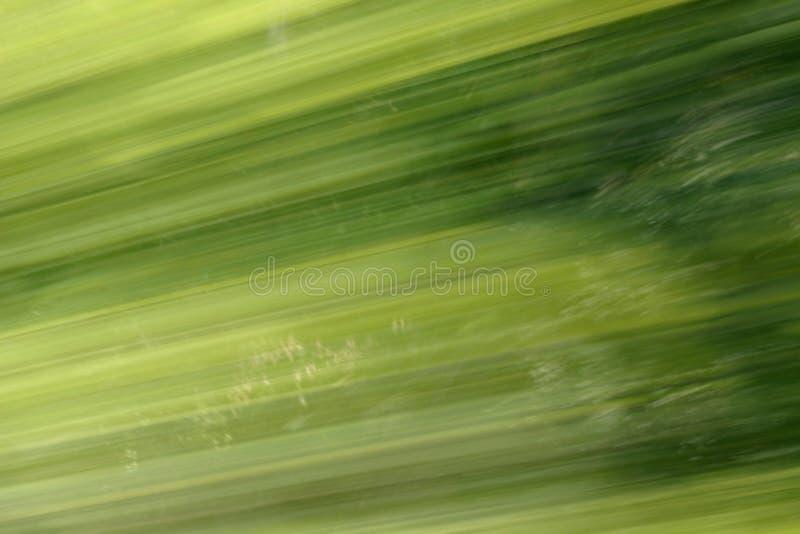 Verde do borrão do fundo foto de stock royalty free
