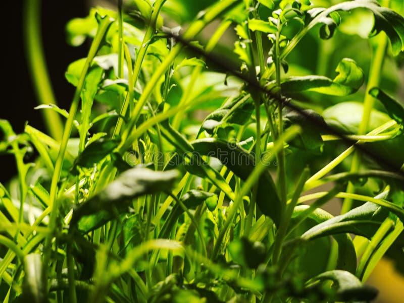 Verde do estilo do vintage fresco Folhas macro do verde Fundo verde com folhas fotos de stock
