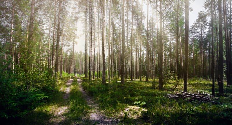 Verde do verão de Forest Ecology fotos de stock royalty free