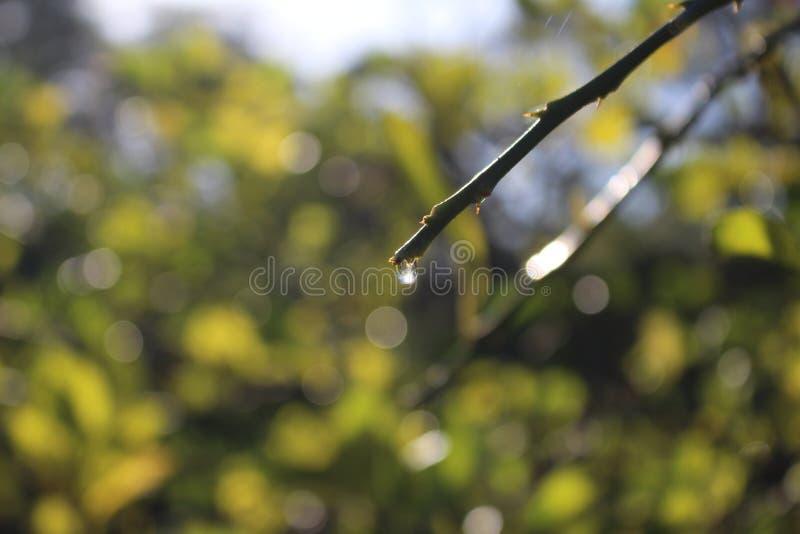 Verde e naturale fotografia stock