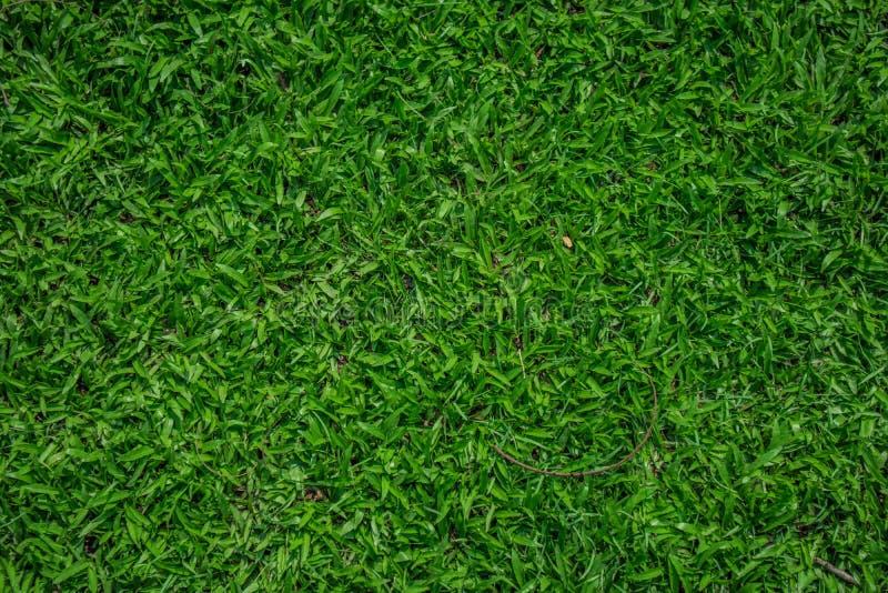 Verde eccellente immagini stock