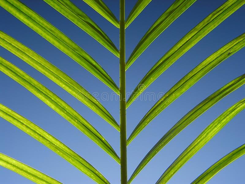 Verde en azul foto de archivo libre de regalías