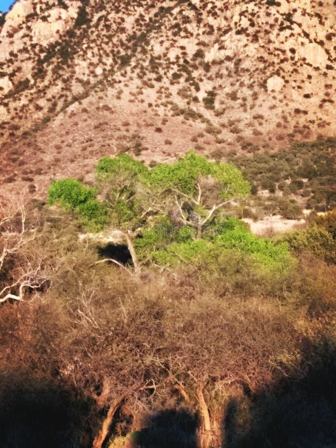 Verde en el desierto imagenes de archivo