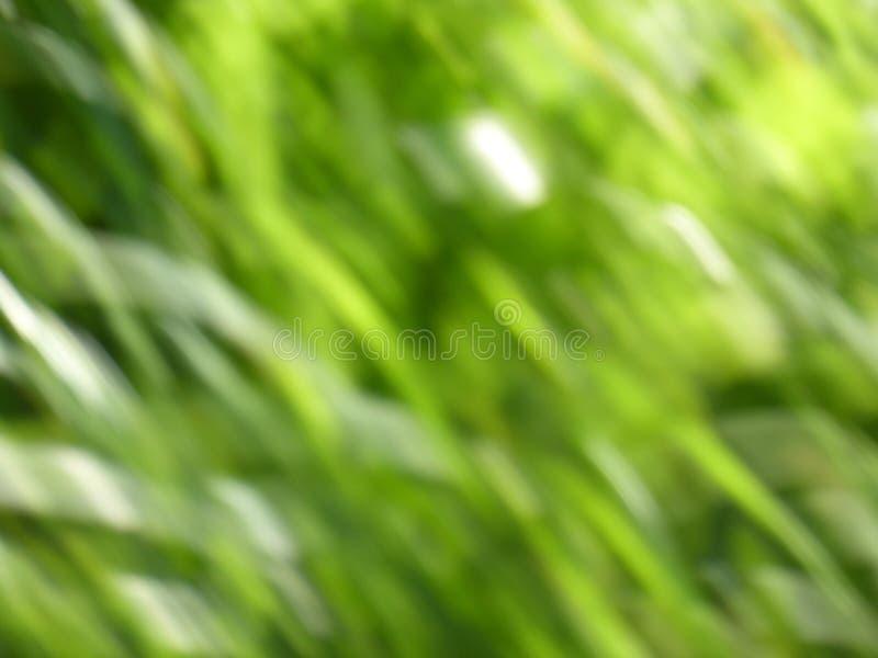 Download Verde, Fondo De La Ecología Foto de archivo - Imagen de bosque, sano: 44857654