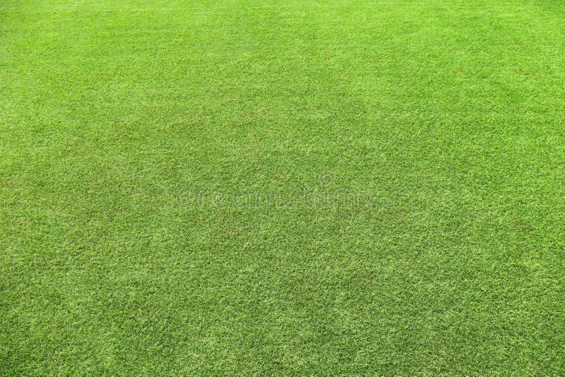 Verde fresco verde ambientale di struttura naturale dell'erba manicured fotografia stock
