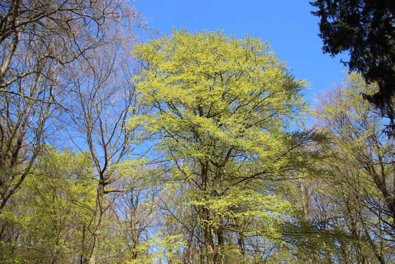 Verde fresco Piante che germogliano le giovani foglie in primavera fotografia stock