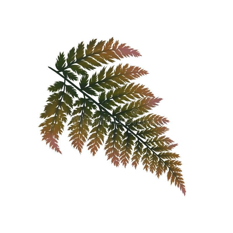 Verde grande da samambaia do outono e folha alaranjada ilustração royalty free