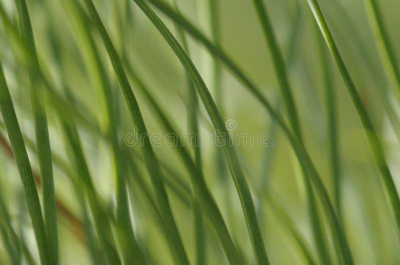 Verde hermoso, agujas foto de archivo