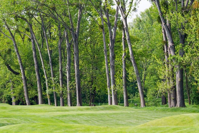 Verde lindo do golfe fotos de stock