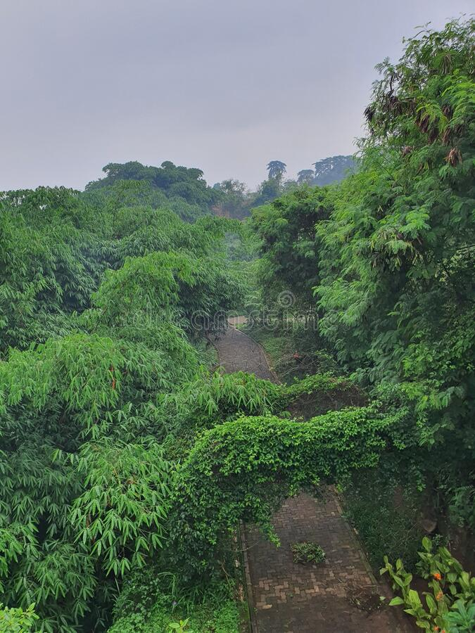verde lussuoso nella città meridionale di tangerang West Java Indonesia fotografia stock
