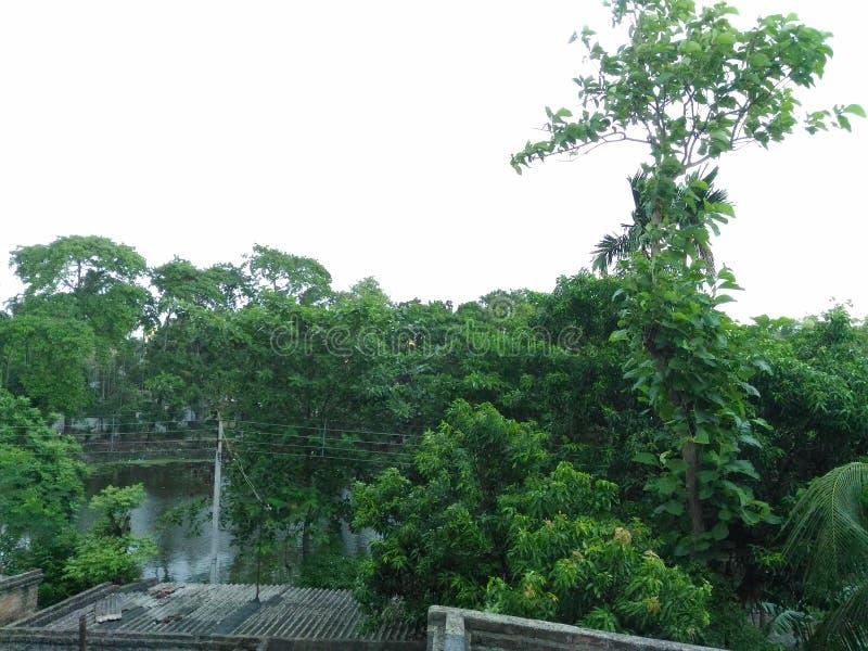 Verde na floresta pura da vila foto de stock royalty free