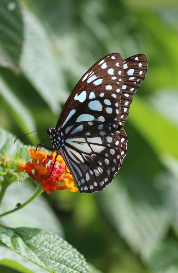 Verde natural da borboleta da flor foto de stock