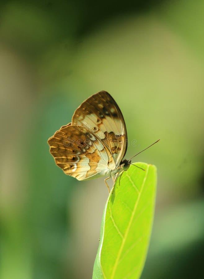 Verde natural da borboleta da flor foto de stock royalty free