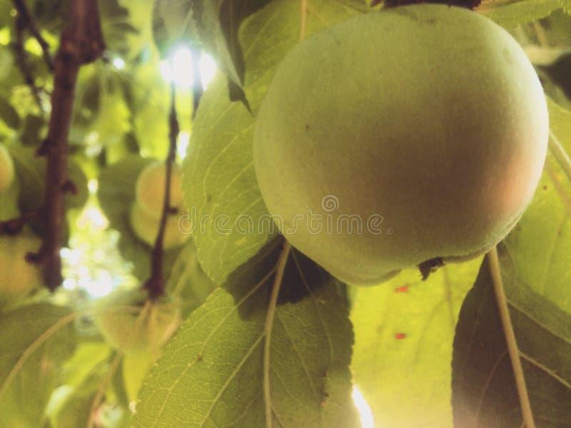 Verde perfeito foto de stock royalty free