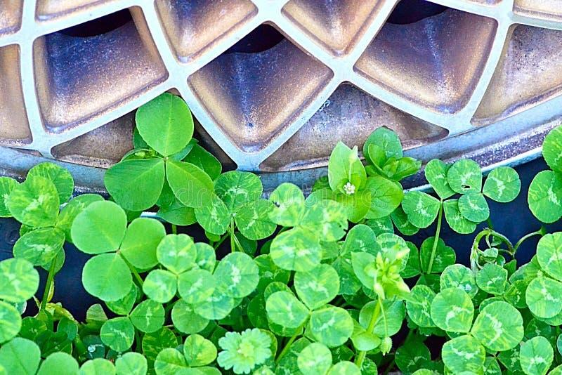 Verde più verde fotografie stock