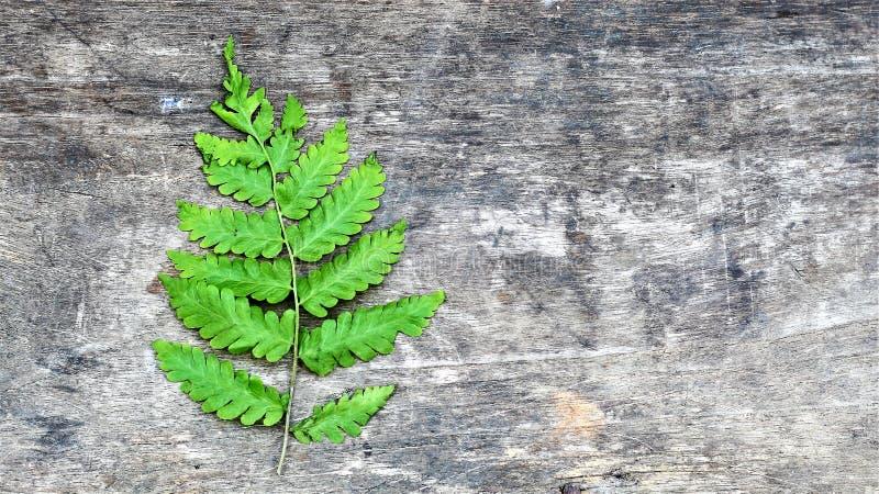 Verde, placa, madeira, folhas fotos de stock