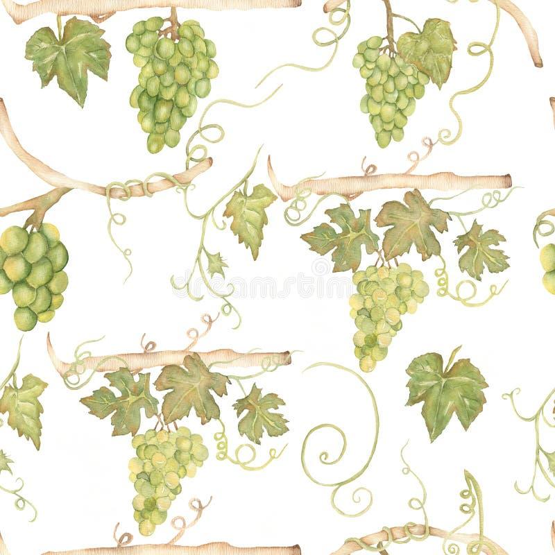 Verde sem emenda tirado da aquarela mão bonita e teste padrão amarelo com ramos e folhas das uvas Isolado no fundo branco ilustração royalty free