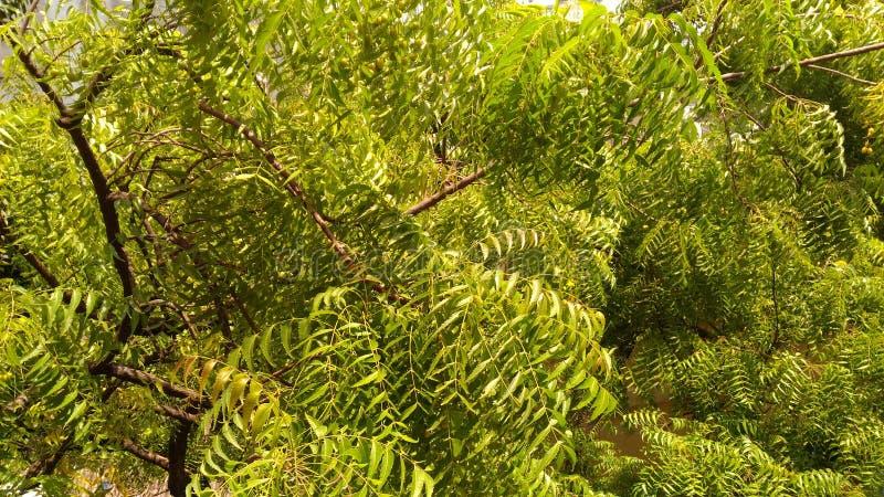 Verde tão fresco fotografia de stock