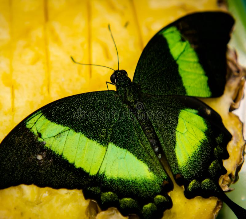 Verde voado fotografia de stock