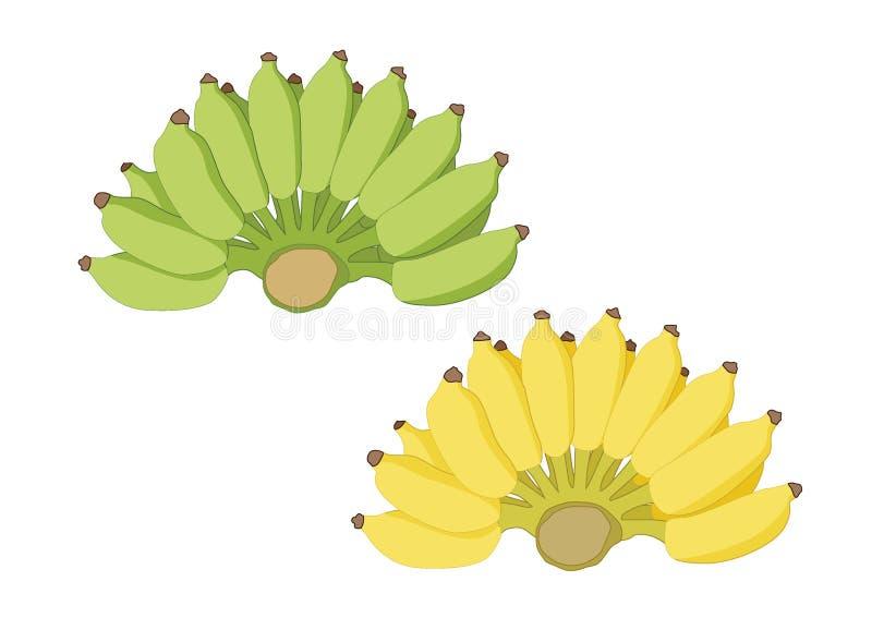 Verde y amarillo del plátano en el vector blanco del ejemplo del fondo stock de ilustración