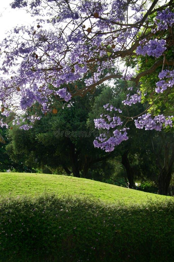 Verde y púrpura fotos de archivo libres de regalías