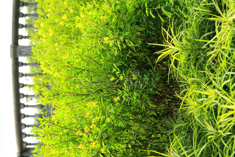 Download Verdes brilhantes imagem de stock. Imagem de outdoor - 26511449