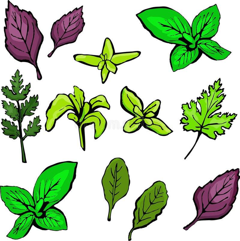 Verdes coloreados de la ensalada aislados en el fondo blanco ilustración del vector
