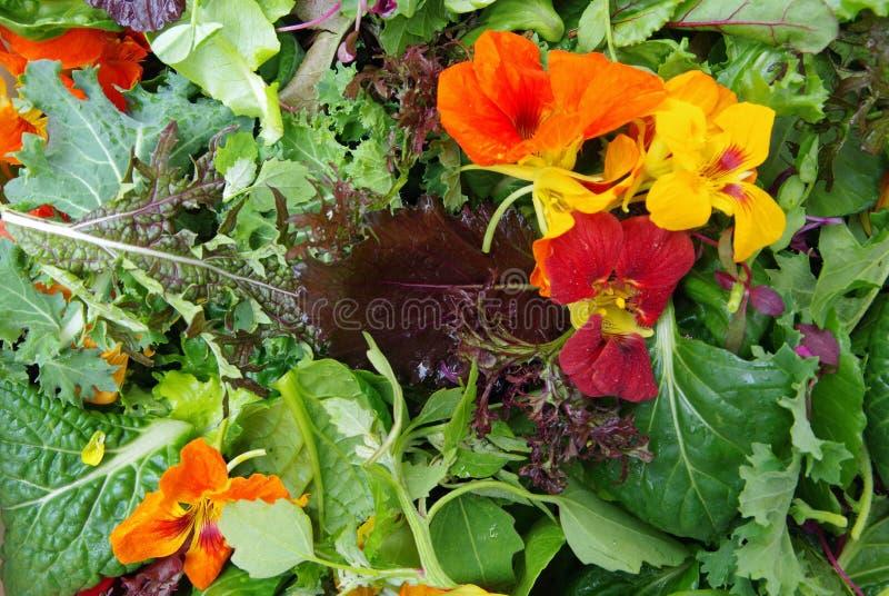 Verdes da salada de Mesclun com flores comestíveis fotografia de stock