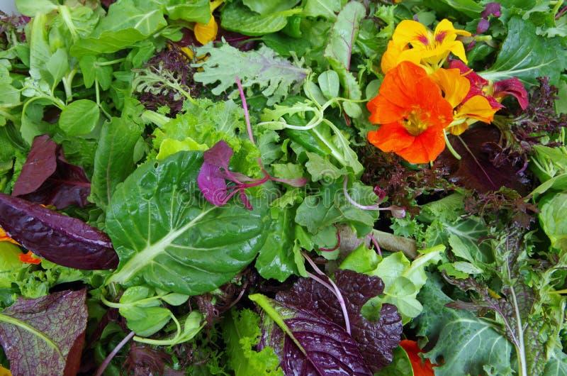 Verdes da salada de Mesclun com flores comestíveis imagens de stock