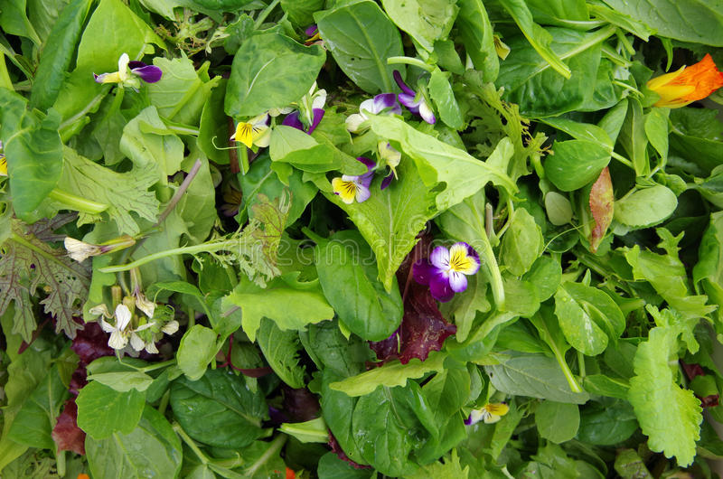 Verdes da salada de Mesclun com flores comestíveis fotos de stock royalty free