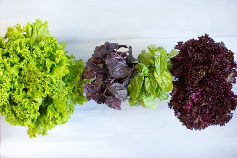 Verdes da salada, ervas fotografia de stock