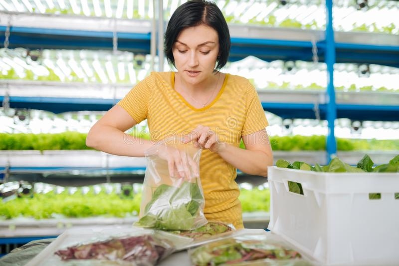 Verdes de colocação da mulher na posição do saco de plástico na estufa fotografia de stock royalty free