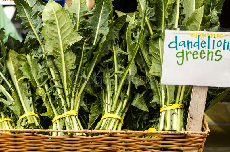 Verdes de dente-de-leão foto de stock royalty free