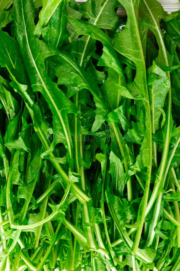 Verdes de diente de león orgánicos frescos imágenes de archivo libres de regalías