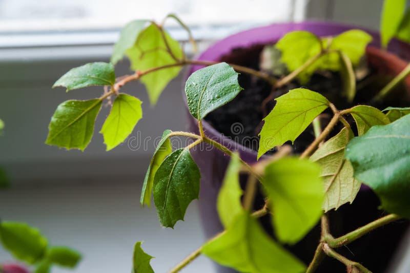 Verdes de florescência do jardim foto de stock