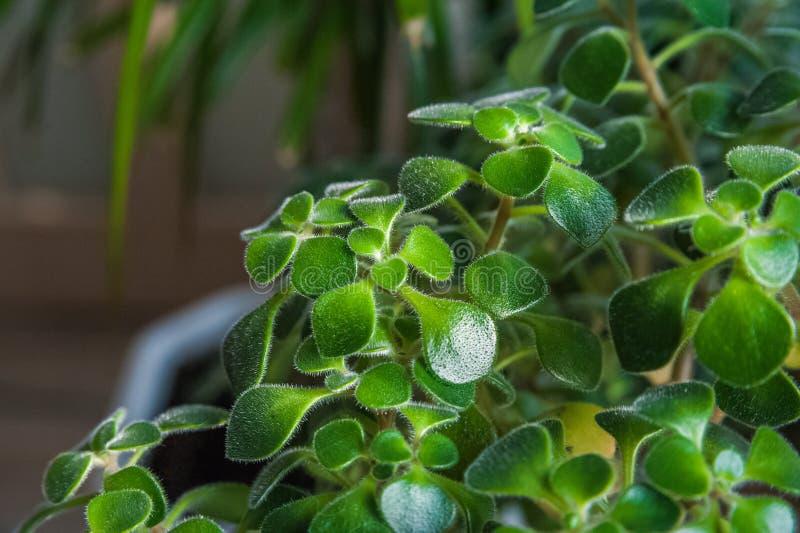 Verdes de florescência do jardim imagem de stock royalty free