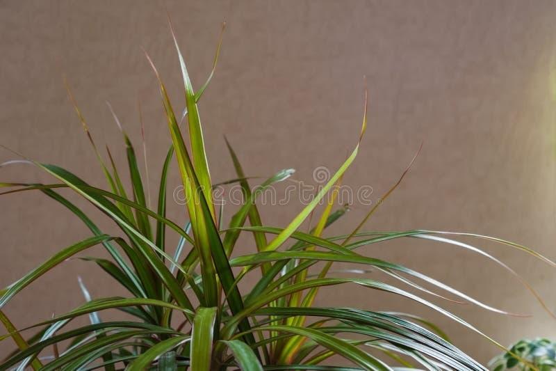 Verdes de florescência do jardim fotografia de stock royalty free