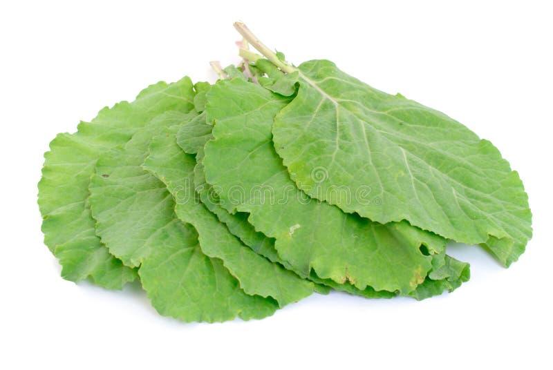 Verdes de la col com n imagen de archivo libre de regalías