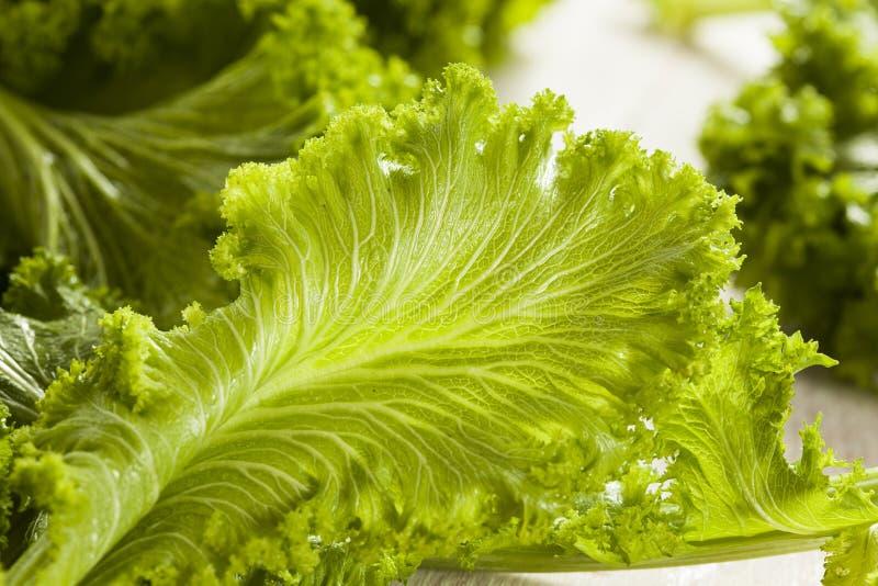 Verdes de mostarda crus orgânicos fotos de stock