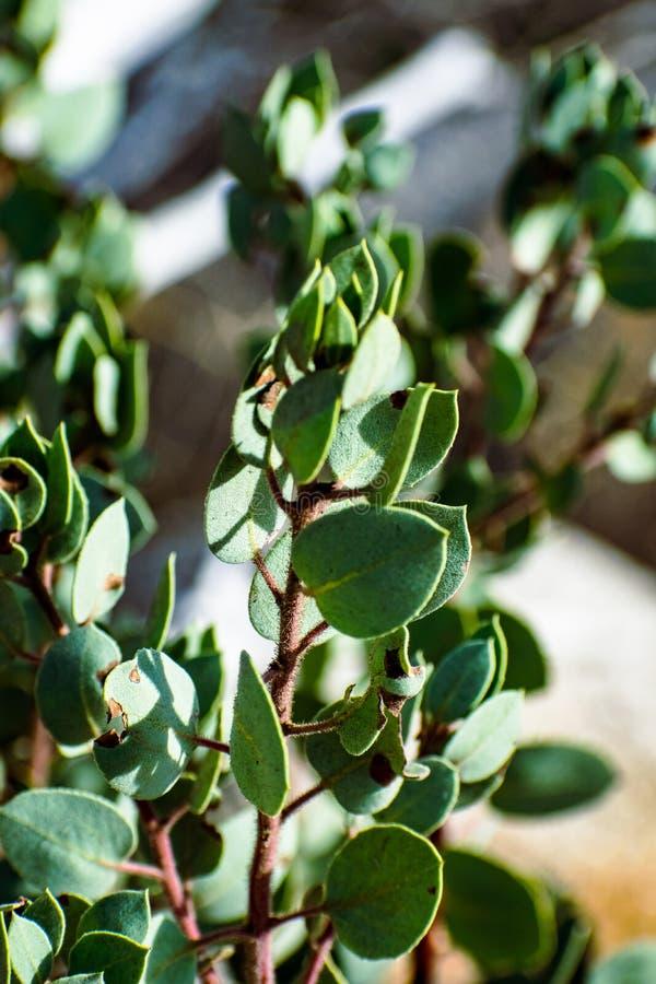 Verdes de Yosemite imagens de stock royalty free